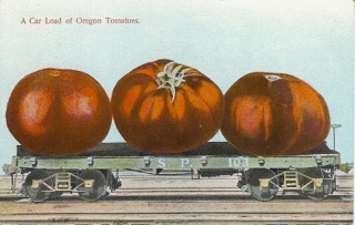 Old postcard featuring Oregon homegrown tomatoes